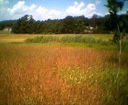Photo of open field
